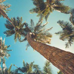 Palmen als Lebensgefühl