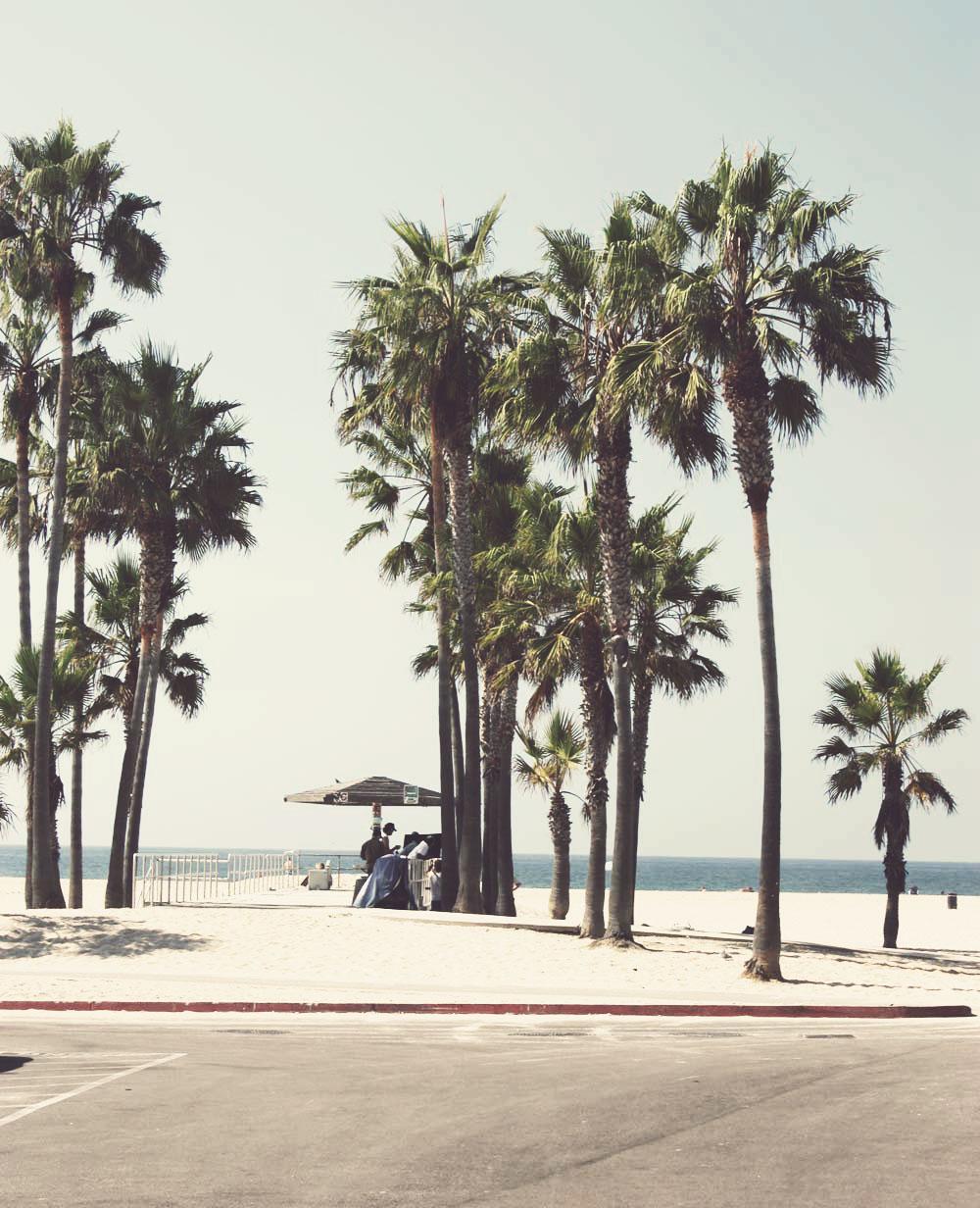 Palmen in heimischen Gefilden anpflanzen