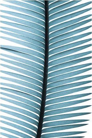 Blue Palm by David & David Studios