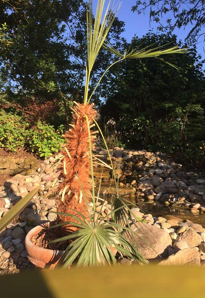 Achtung beim Palmen Kauf