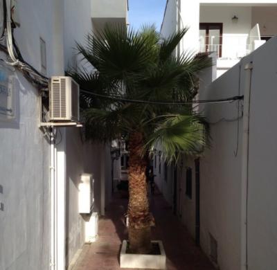 Washingtonia, Platz für eine Palme ist in der kleinsten Hütte