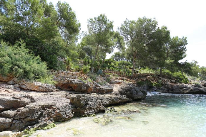 klares Wasser, Felsen und grüne Pflanzen in der Bucht
