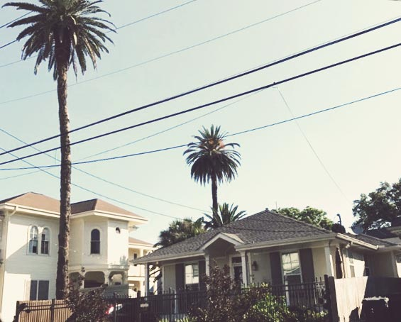 Mike´s Palm Tree Stories