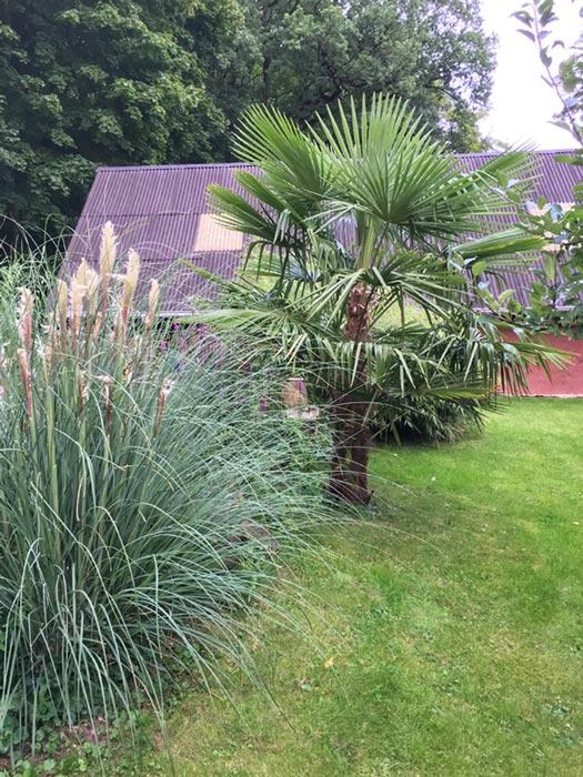 die Palme hat mittlerweile eine stattliche Größe erreicht