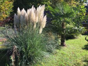 ein sehr kräftiger Stamm ist bei der Größeren Palme zu beobachten