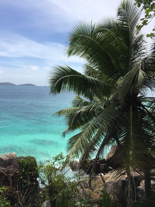 Palmen auf den Seychellen