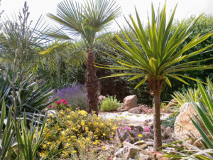 mediterrane Pflanzen in Deutschland