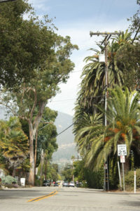 Bild: Straße in Kalifornien mit zahlreichen Palmen an der Seite