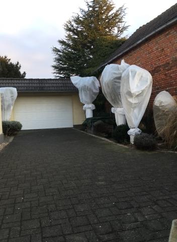 Palmen mit Winterschutz ausgestattet in Deutschland