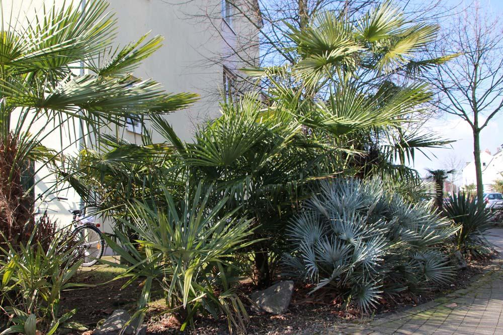 Gärten mit Palmen in Deutschland