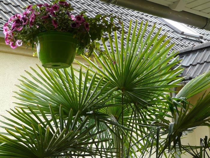 Palmen in Sachsen Anhalt
