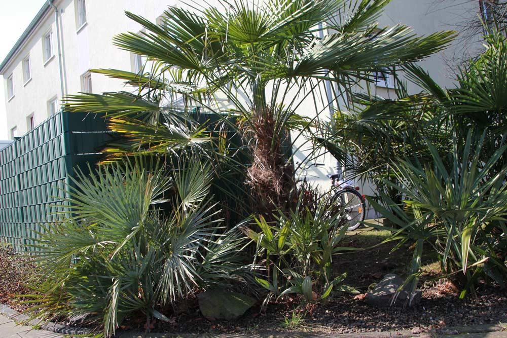 mediterrane Pflanzen in anliegenden Gärten