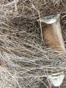 Fasern der Hanfpalme
