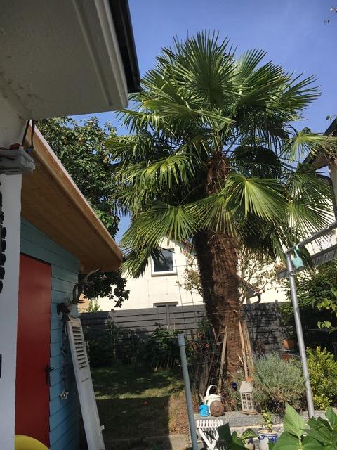 nicht nur in NRW sind Palmen zu finden, auch andere Bundesländer Trumpfen auf