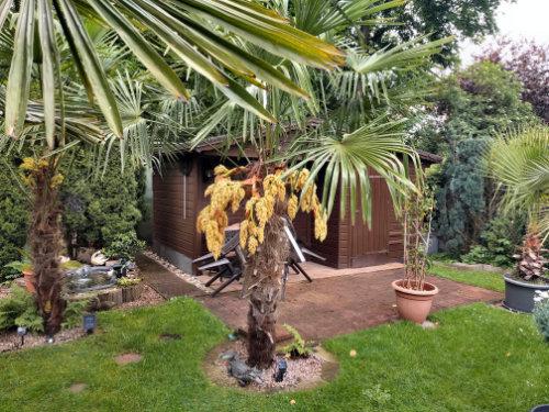 Bild einer Hanfpalme mit gelben - männlichem Blüenstamm