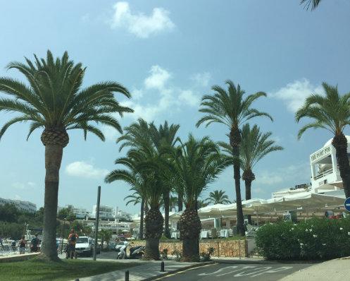 Bild aus dem Yachthafen in Cala D´or auf Mallorca mit den zwei erwähnten Dattelpalmen