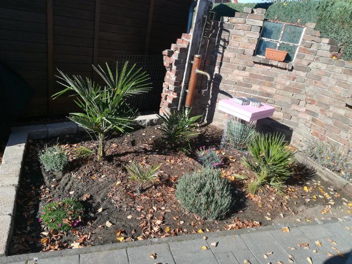 Bild: neu gestaltetes Beet mit kleinen Palmen