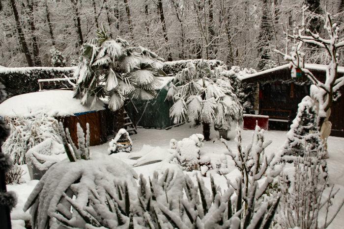 Bild: Palmen mit Schnee bedeckt in Dinslaken