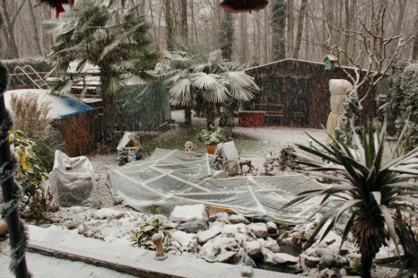 Bild eines verschneiten Palmengartens in Deutschland