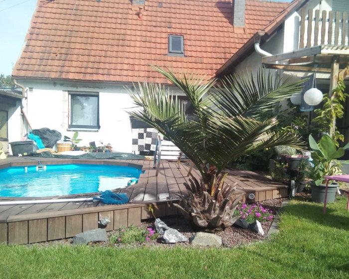 Bild: Honigpalme und Pool in Bayern