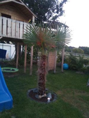 Palmen in Bayern können genau so aussehen
