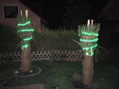 Bild: in der Winterzeit sind auch die Trachy´s an der Krone mit einem Lichterschlauch umwickelt