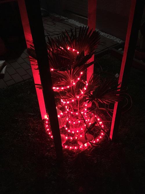 Bild: Palmen mit Lichtschlauch zur Überwinterung umwickelt