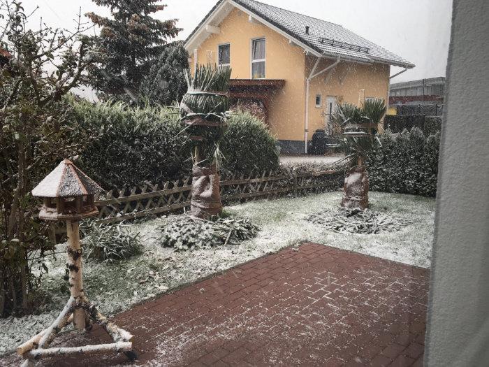 ausgepflanzte Palmen mit leichtem Schnee bedeckt