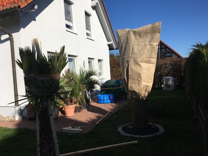 Wintervorbereitung der Palmen, die Abdeckungen sind teils angebracht und Topfpalmen zusammengestellt