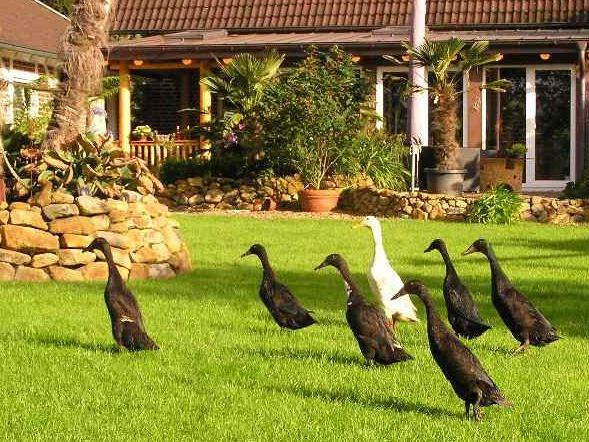 Bild von Enten im mediterranen Garten