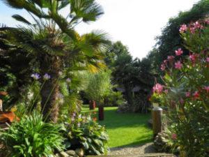 ausgepflanzte Palmen, eine Rasenfläche im 5000m² Garten