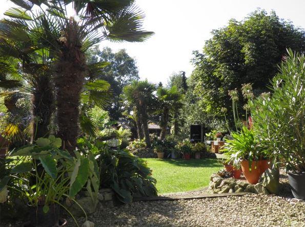 links eingepflanzte Palmen sowie hinter der mittig gelegenen Rasenfläche