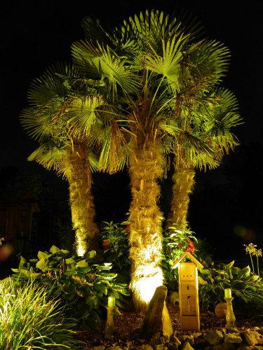 beleuchtete Hanfpalmen im Garten