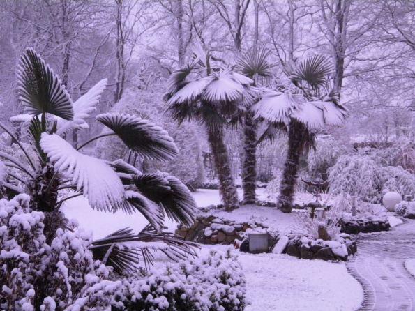 Schnee bedeckte hanfpalmen