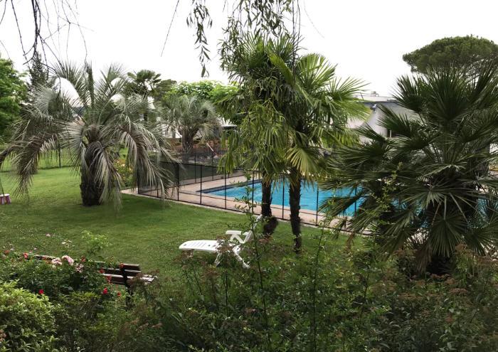Bild drei verschiedener ausgepflanzter winterharter Palmen: Butia capitata, Chamaerops humilis und Trachycarpus fortunei
