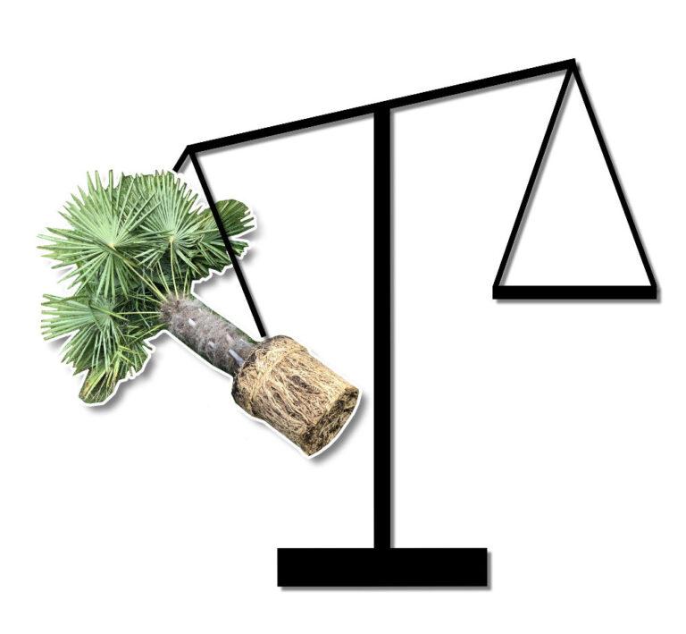 Symbol für eine Bewertung des Schwierigkeitsgrades einer Palmenart