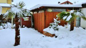 Palmen im Schnee in Baden Württemberg